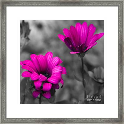 Wildflower 2 Framed Print