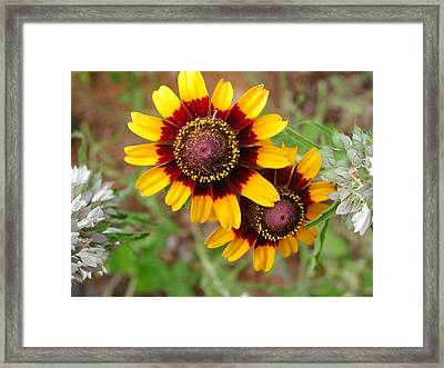 Wildflower 5 Framed Print by Michael Rushing