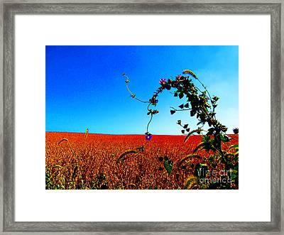 Wildflower And Soy Framed Print by Tina M Wenger