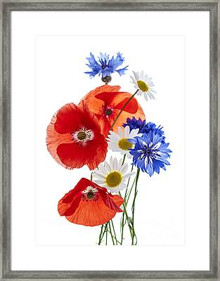 Wildflower Arrangement Framed Print by Elena Elisseeva
