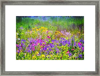 Wildflower Beauty  Framed Print