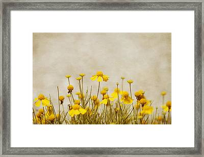 Wildflower Daisies Framed Print by Kim Hojnacki