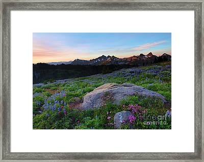 Wildflower Dawning Framed Print