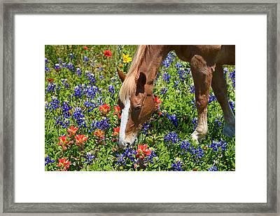 Wildflower Feast Framed Print by Lynn Bauer