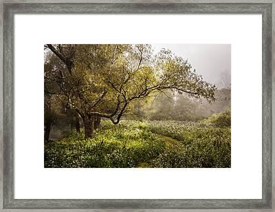 Wildflower Garden Framed Print by Debra and Dave Vanderlaan