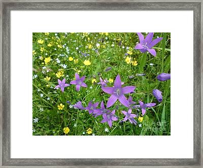 Wildflower Garden Framed Print by Martin Howard