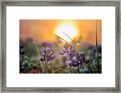Wildflower Glow Framed Print