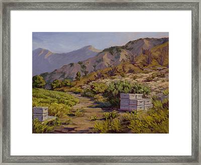 Wildflower Honey Fields Framed Print by Jane Thorpe