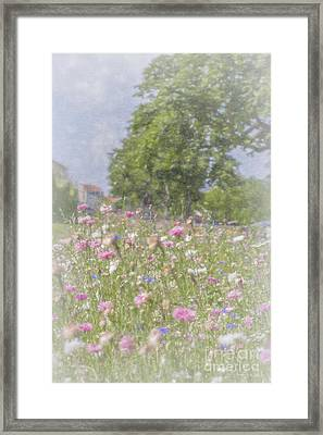 Wildflower Impressionism Framed Print