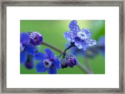 Wildflower In The Rain Framed Print by Kathy Yates