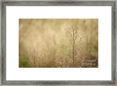 Wildflower Framed Print by Jolanta Meskauskiene