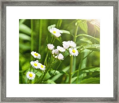 Wildflower Framed Print by Kellie Prowse