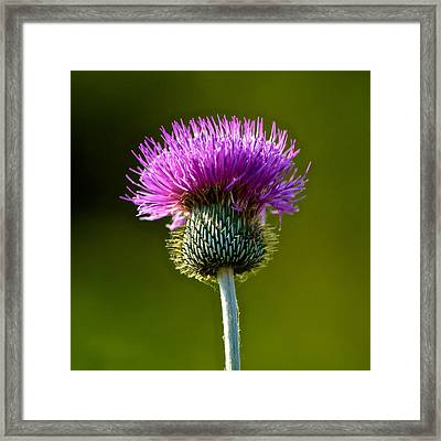 Wildflower Macro Framed Print