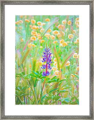 Wildflower Meadow - Spring In Central California Framed Print by Ram Vasudev