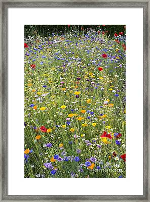 Wildflower Mix Framed Print by Tim Gainey