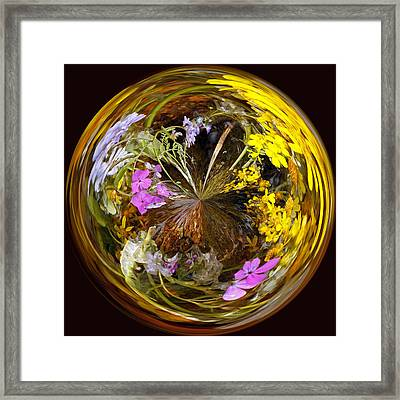 Framed Print featuring the photograph Wildflower Paperweight by Gary Holmes