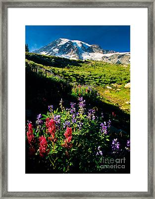 Wildflower Paradise Framed Print by Inge Johnsson