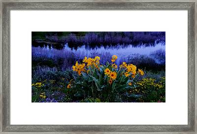 Wildflower Reflection Framed Print by Dan Sproul