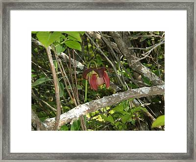 Framed Print featuring the photograph Wildflower by Robert Nickologianis