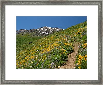 Wildflower Show Framed Print by Jenessa Rahn