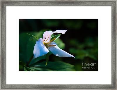 Wildflower Surprise Framed Print by Jennifer Apffel