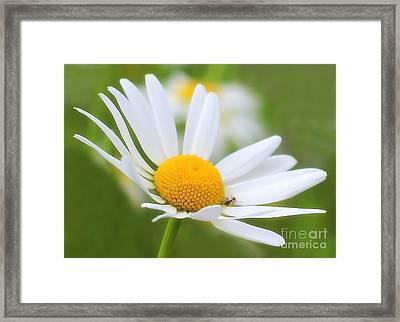 Wildflower Framed Print by Sylvia  Niklasson