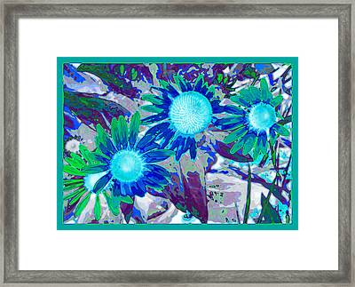 Wildflower Framed Print by Tom Druin