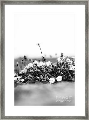 Wildflower Wall Framed Print