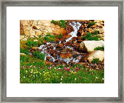 Wildflower Waterfall Framed Print by Tranquil Light  Photography