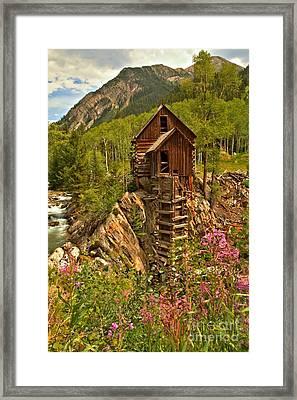Wildflower Wonderland Framed Print by Adam Jewell
