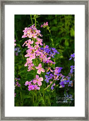 Wildflower Woods Framed Print