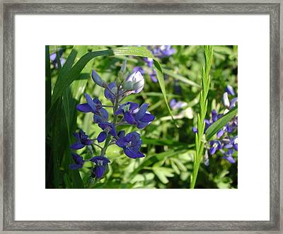 Wildflower1 Framed Print by Michael Rushing