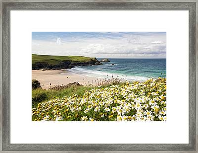 Wildflowers Above Porth Joke Framed Print by Ashley Cooper
