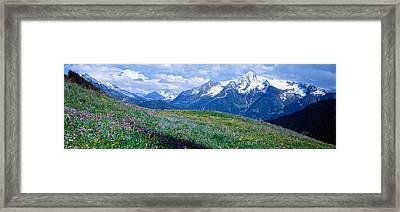 Wildflowers Along Mountainside Framed Print