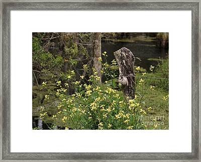 Wildflowers And Barbed Wire Framed Print by Theresa Willingham