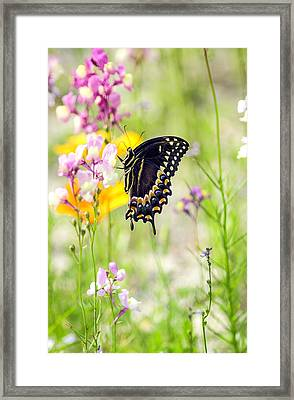 Wildflowers And Butterfly Framed Print by Bill LITTELL