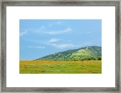 Afternoon Delight - Wildflowers And Cirrus Clouds - Spring In Central California Framed Print