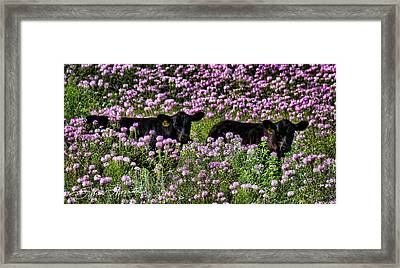 Wildflowers And Friends Framed Print by Sylvia Thornton