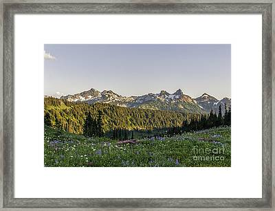 Wildflowers And The Tatoosh Range Framed Print