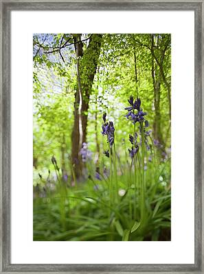 Wildflowers And Trees Illuminated Framed Print by John Short