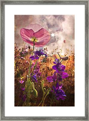 Wildflowers At Dawn Framed Print by Debra and Dave Vanderlaan