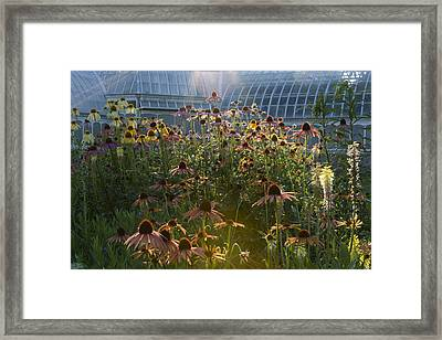 Wildflowers At Phipps Framed Print