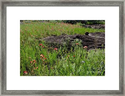 Wildflowers At Reveille Peak Ranch Framed Print by Cathy Alba