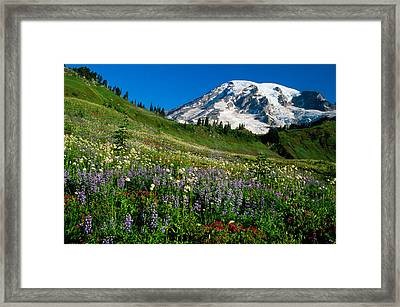 Wildflowers Blooming In Front Of Snowy Framed Print by Panoramic Images