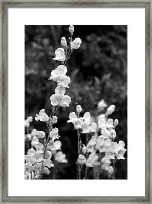 Wildflowers/bw1 Framed Print by Diana Shay Diehl
