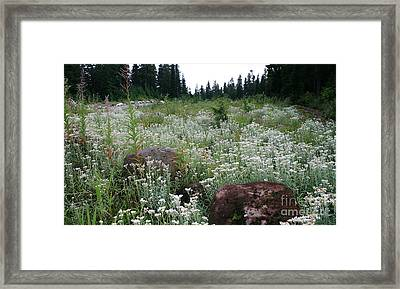 Wildflowers Callaghan Lake  Canada Framed Print by Amanda Holmes Tzafrir