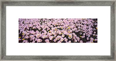 Wildflowers Galveston Tx Usa Framed Print by Panoramic Images