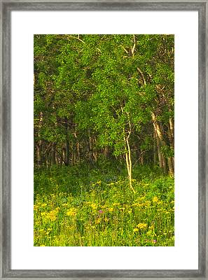 Framed Print featuring the photograph Wildflowers Glacier National Park Montana by Ram Vasudev