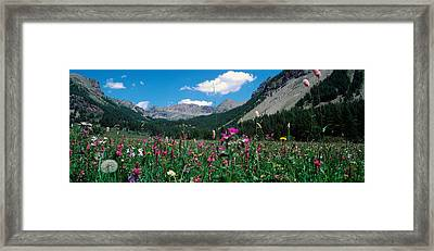 Wildflowers In A Field At Lakeside Framed Print by Panoramic Images