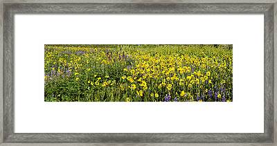 Wildflowers In A Field, Crested Butte Framed Print